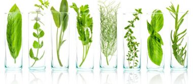 Treating Menopause with Plant Extracts