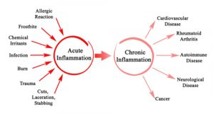 How the Inflammation Process Changes as We Age 1